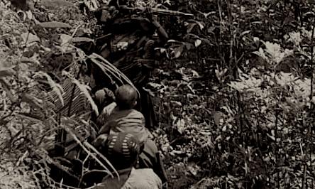 Berita Papua Situs Berita Tolikara No 1